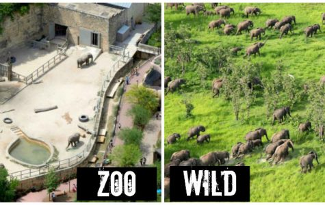 The Pro's and Con's of Zoos