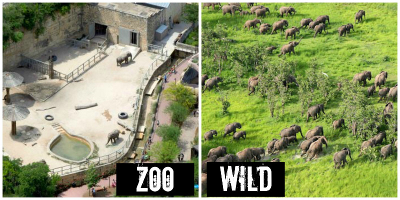 Photo+caption%3A+Although+zoos+seem+fun%2C+many+animals+are+mistreated+or+taken+from+their+habitats.