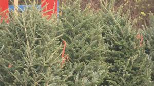 The average price of a real tree at Rudolph's lot on Rampart is around $100.