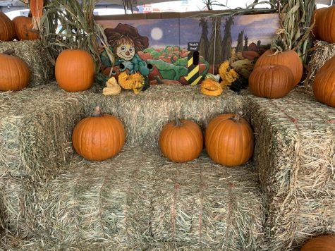 Pumpkins at the Pumpkin Patch.